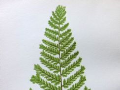 3rd July 2019. Fern Prints by Lowe and Pratt